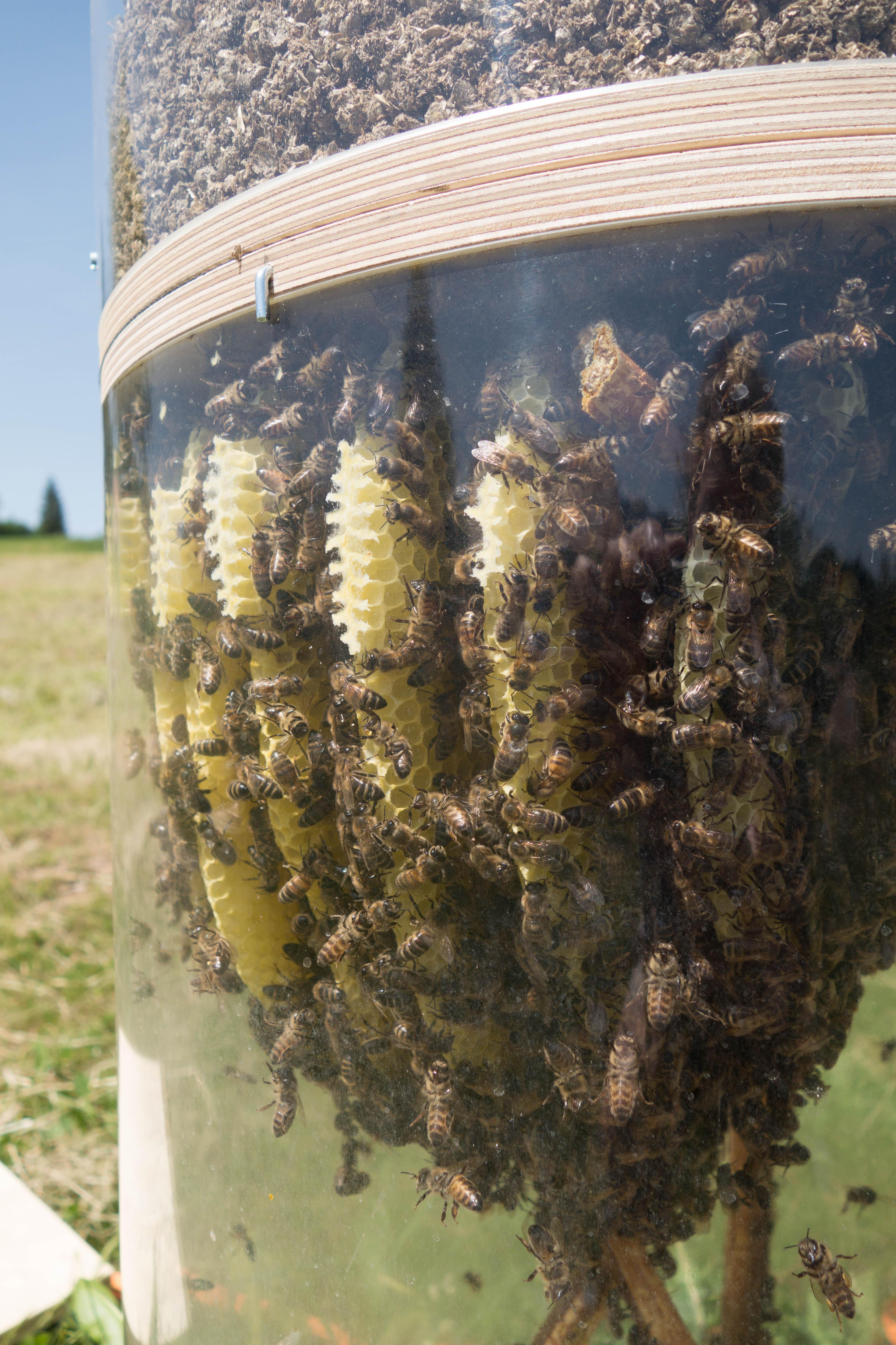 Bienenstock Aus Terrakotta Freethebees Unsere Bienen